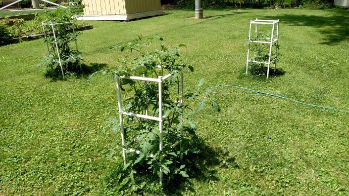 O/T Tomatoes..-tomatos.jpg